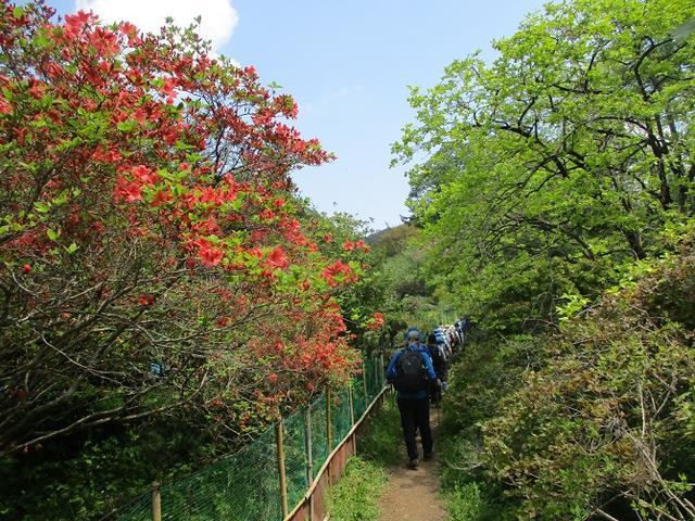 画像6: 5月4日に岡田ガイドのツアーで埼玉県の「越上山」へ行って来ました♪