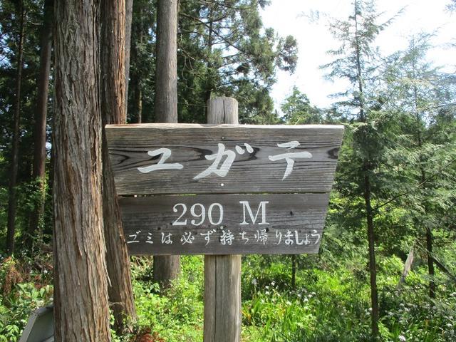 画像5: 5月4日に岡田ガイドのツアーで埼玉県の「越上山」へ行って来ました♪
