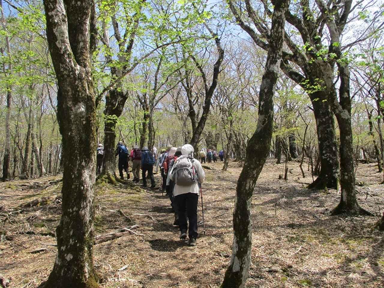 画像7: 5月10日に山旅会 「籠坂峠から三国山」 ツアーにいってきました!