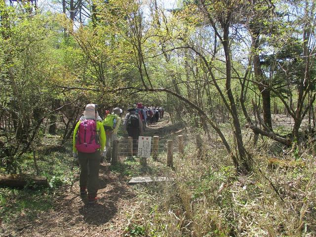 画像1: 5月10日に山旅会 「籠坂峠から三国山」 ツアーにいってきました!