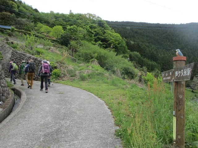 画像1: 5月7日に山旅会 「秩父丸山」 ツアーに行ってきました!