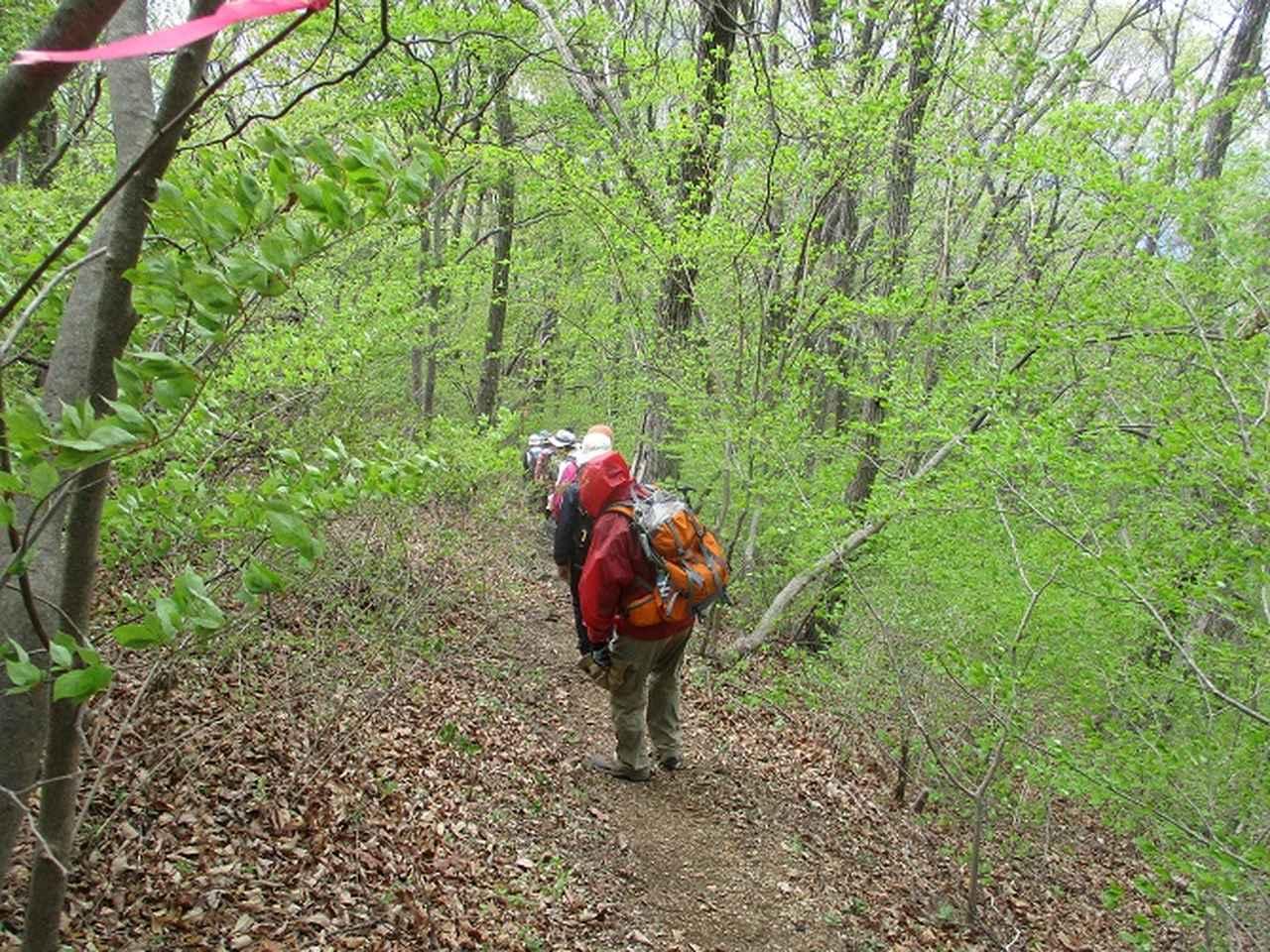 画像8: 5月7日に山旅会 「秩父丸山」 ツアーに行ってきました!
