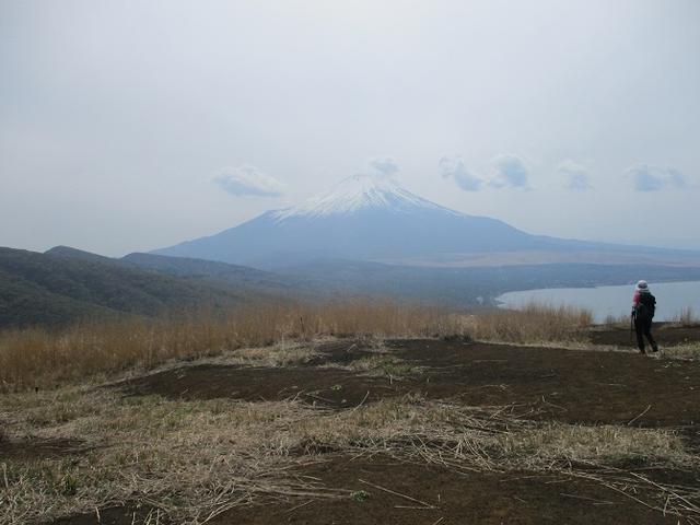 画像11: 5月10日に山旅会 「籠坂峠から三国山」 ツアーにいってきました!