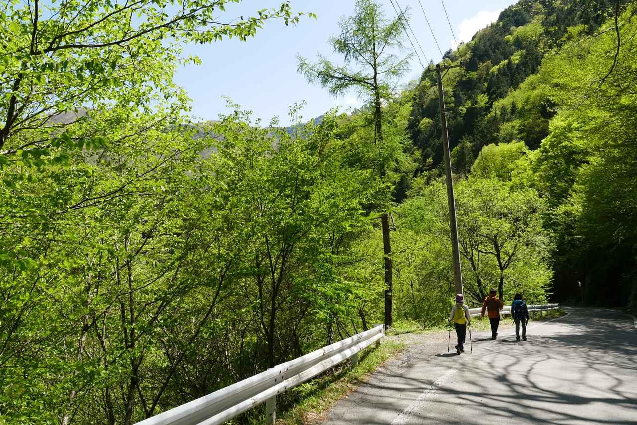 画像: しらび林道の新緑(イメージ)