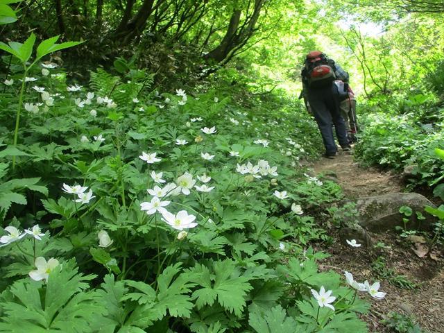 画像8: 5月8日、9日に岡田ガイドのコースで新潟の山へ行って来ました♪