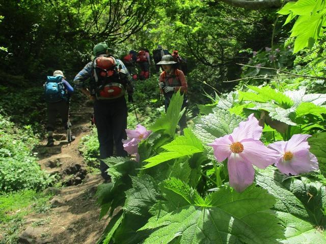 画像9: 5月8日、9日に岡田ガイドのコースで新潟の山へ行って来ました♪