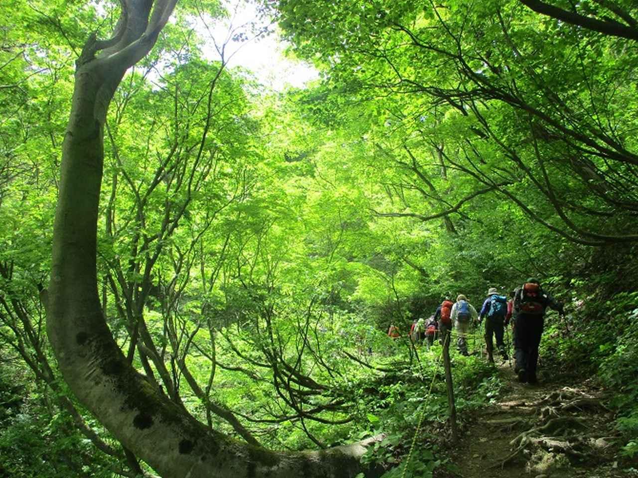 画像6: 5月8日、9日に岡田ガイドのコースで新潟の山へ行って来ました♪
