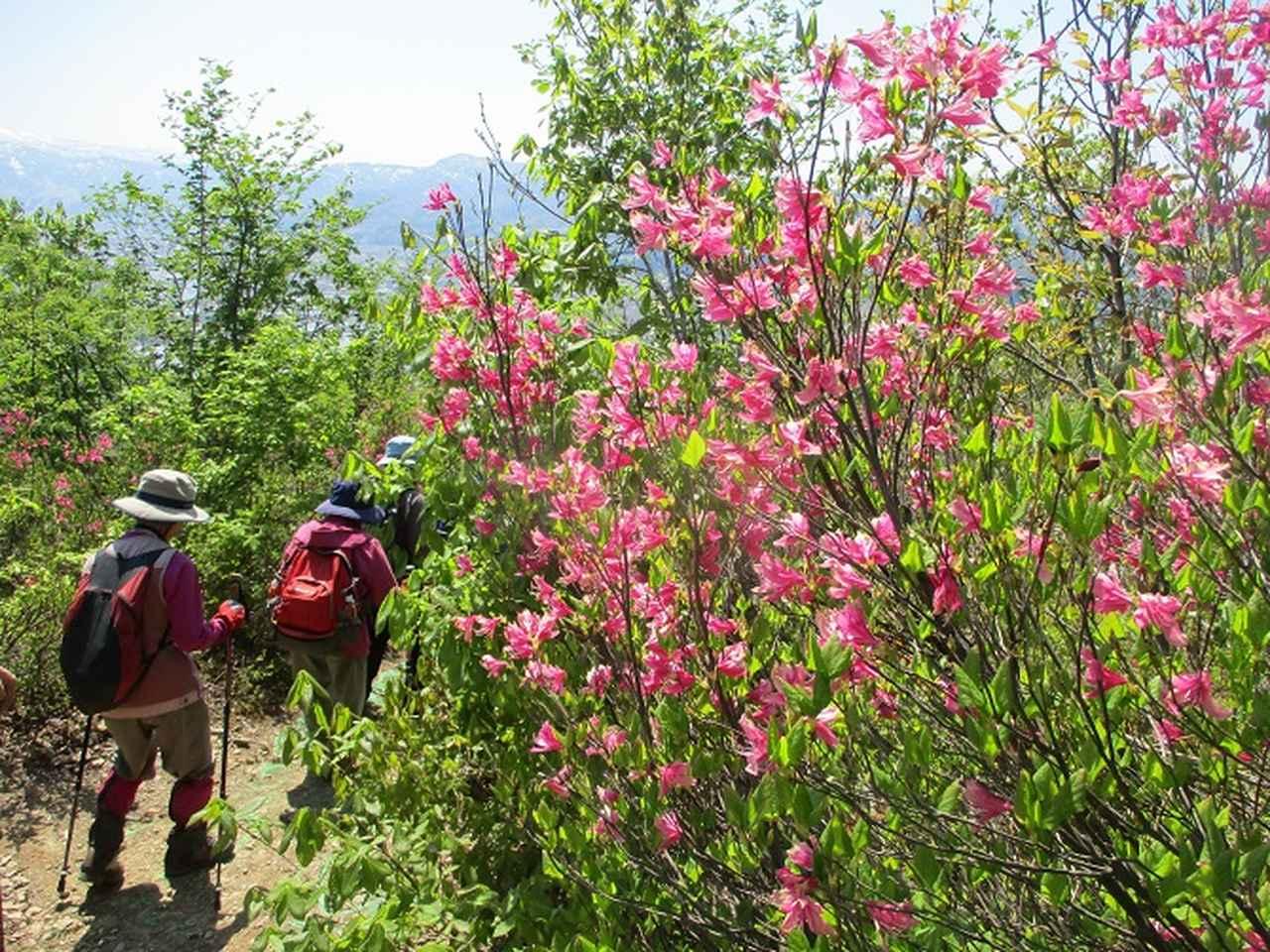 画像9: 5月8日・9日に岡田ガイドのコースで暑い暑い新潟の山へ行って来ました♪