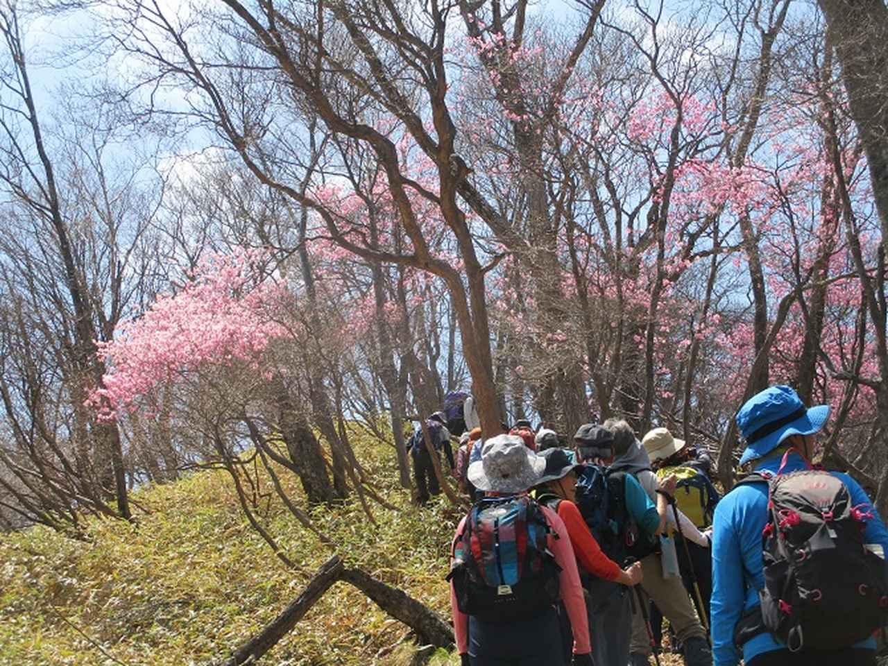 画像6: 13日に岡田ガイドのコースで、 茶ノ木平~華厳の滝 へ行ってきました♪