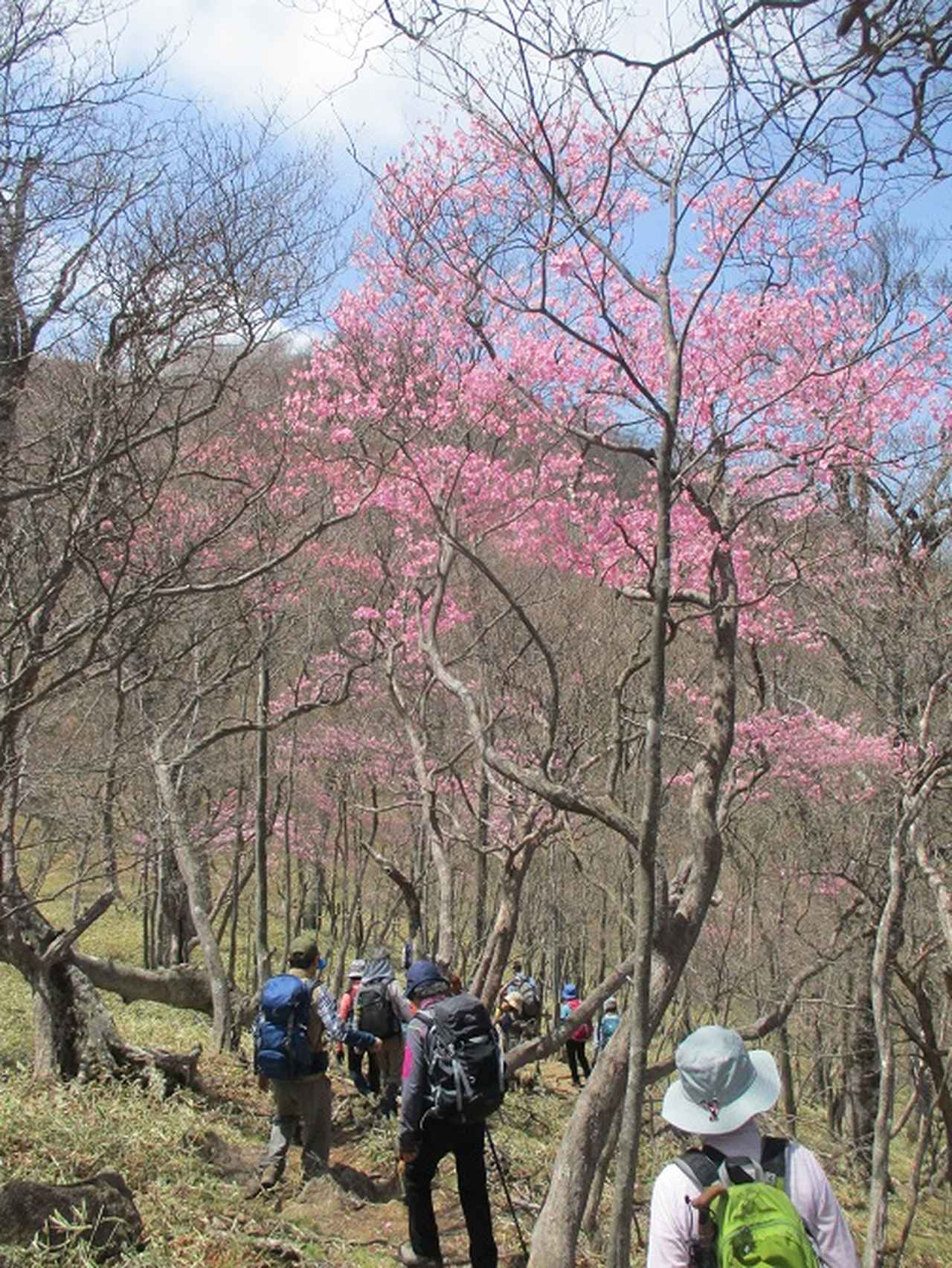 画像7: 13日に岡田ガイドのコースで、 茶ノ木平~華厳の滝 へ行ってきました♪