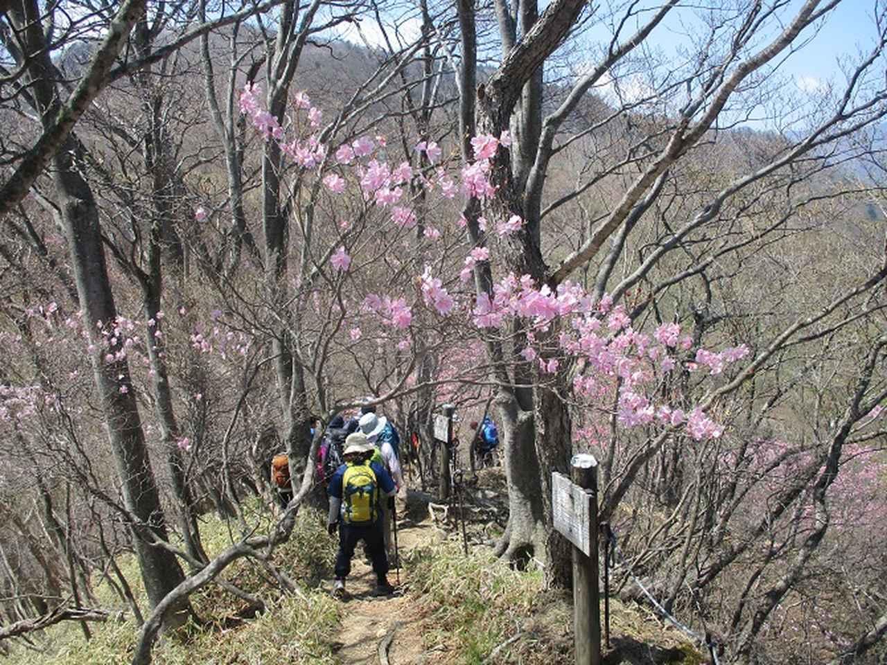 画像3: 13日に岡田ガイドのコースで、 茶ノ木平~華厳の滝 へ行ってきました♪