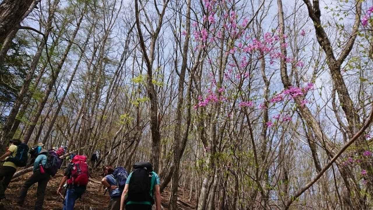 画像7: 宮下ガイドの秀麗富岳十二景シリーズ第9回目! 奈良倉山 へ行って来ました♪