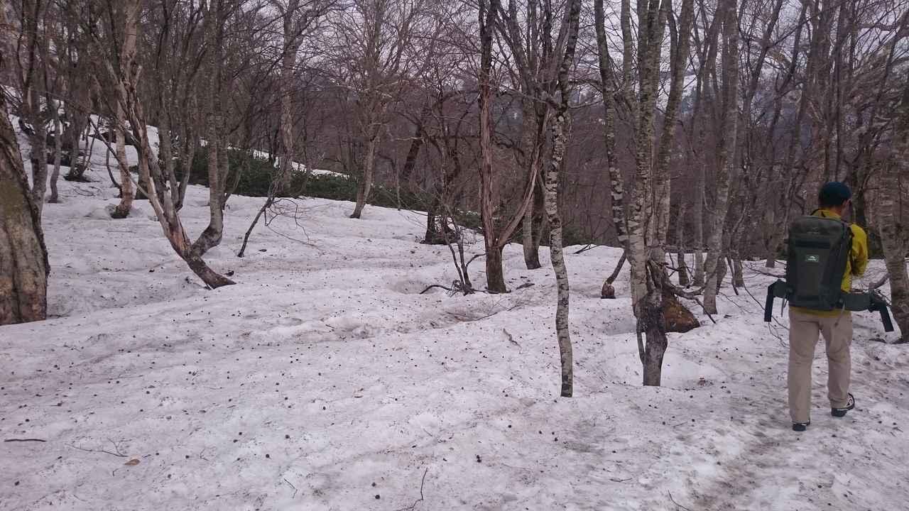 画像: まだまだ雪たっぷりの尾瀬に入山!