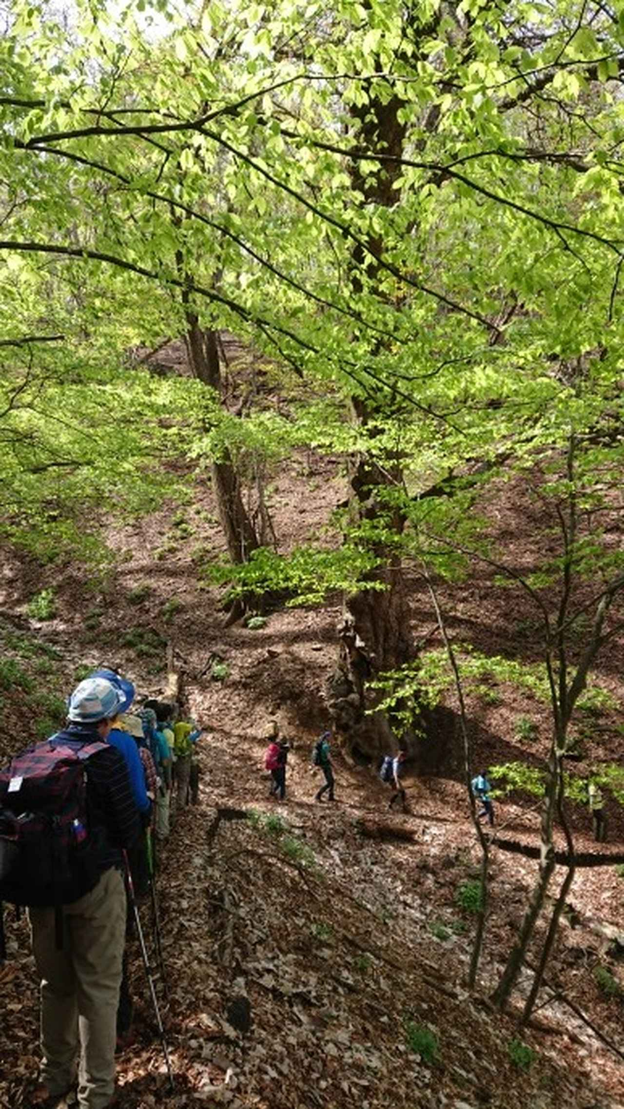 画像10: 宮下ガイドの秀麗富岳十二景シリーズ第9回目! 奈良倉山 へ行って来ました♪