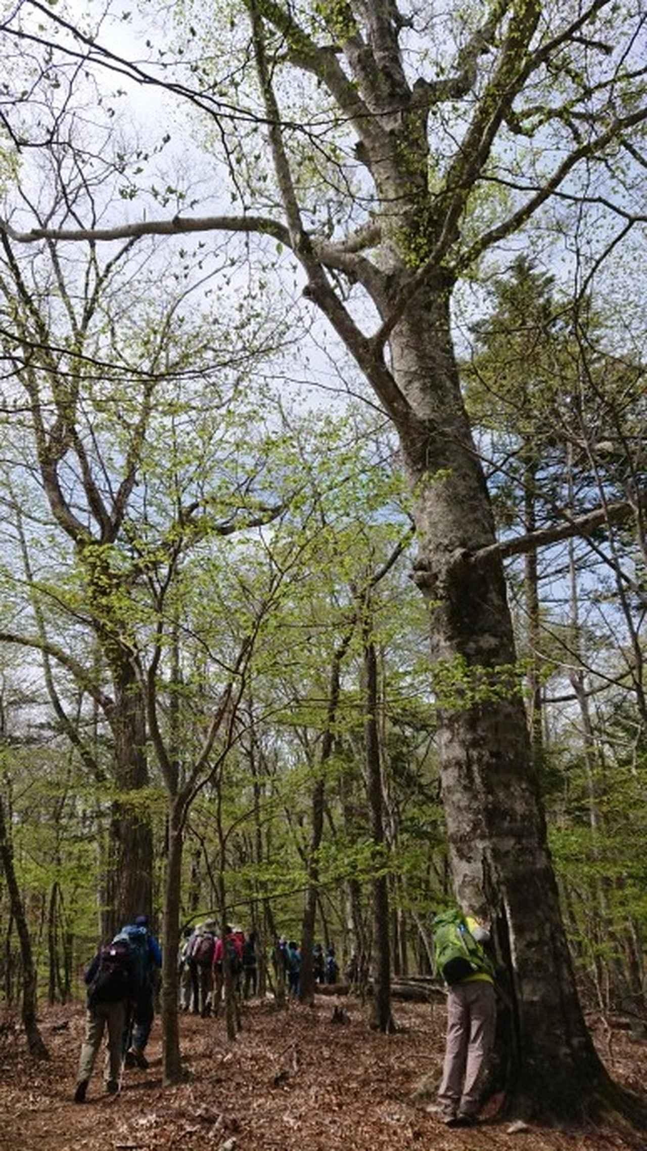 画像9: 宮下ガイドの秀麗富岳十二景シリーズ第9回目! 奈良倉山 へ行って来ました♪