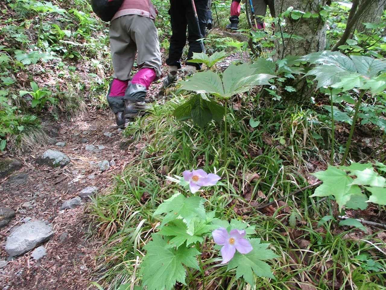 画像8: 5月14日~15日で山旅会 「佐渡」 ツアーに行ってきました!