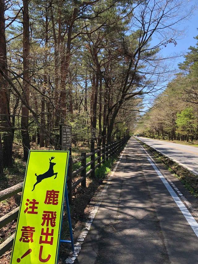 画像: ハリモミ純林
