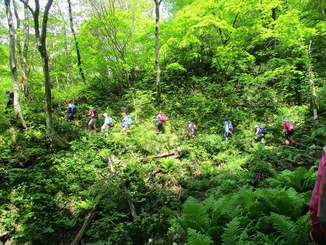 画像5: 5月14日~15日で山旅会 「佐渡」 ツアーに行ってきました!