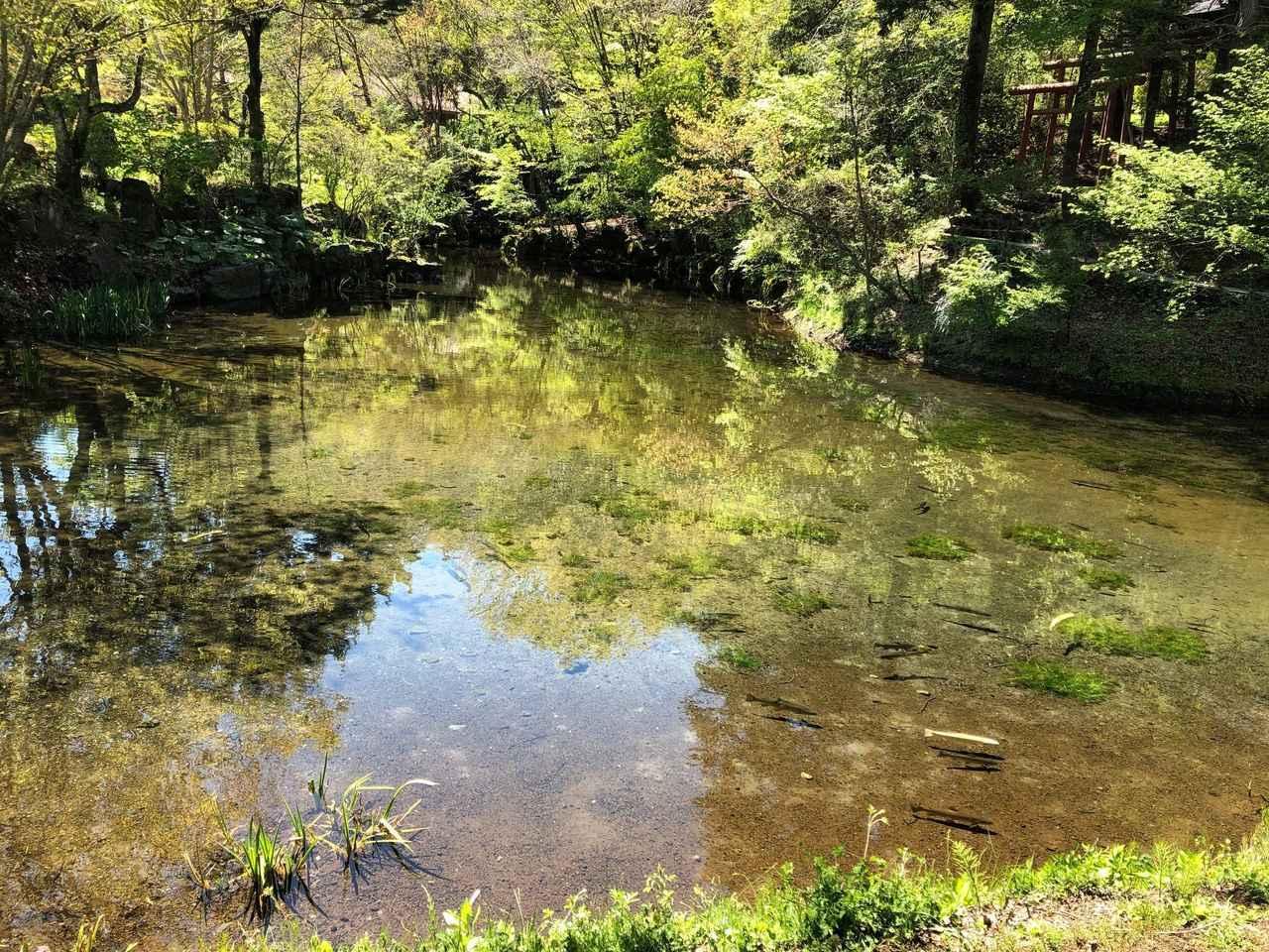 画像: 忍野八海・出口池(世界文化遺産「富士山 信仰の対象と芸術の源泉」の構成資産の一つ。)
