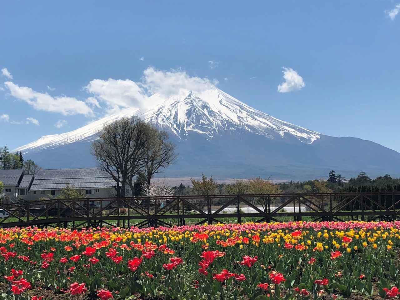 画像4: 富士山すそ野ぐるり1周ウォーク 第2回に行ってきました!