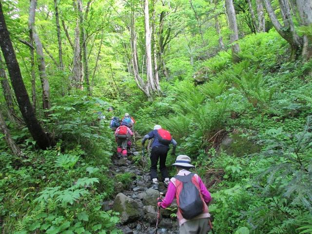 画像2: 5月14日~15日で山旅会 「佐渡」 ツアーに行ってきました!