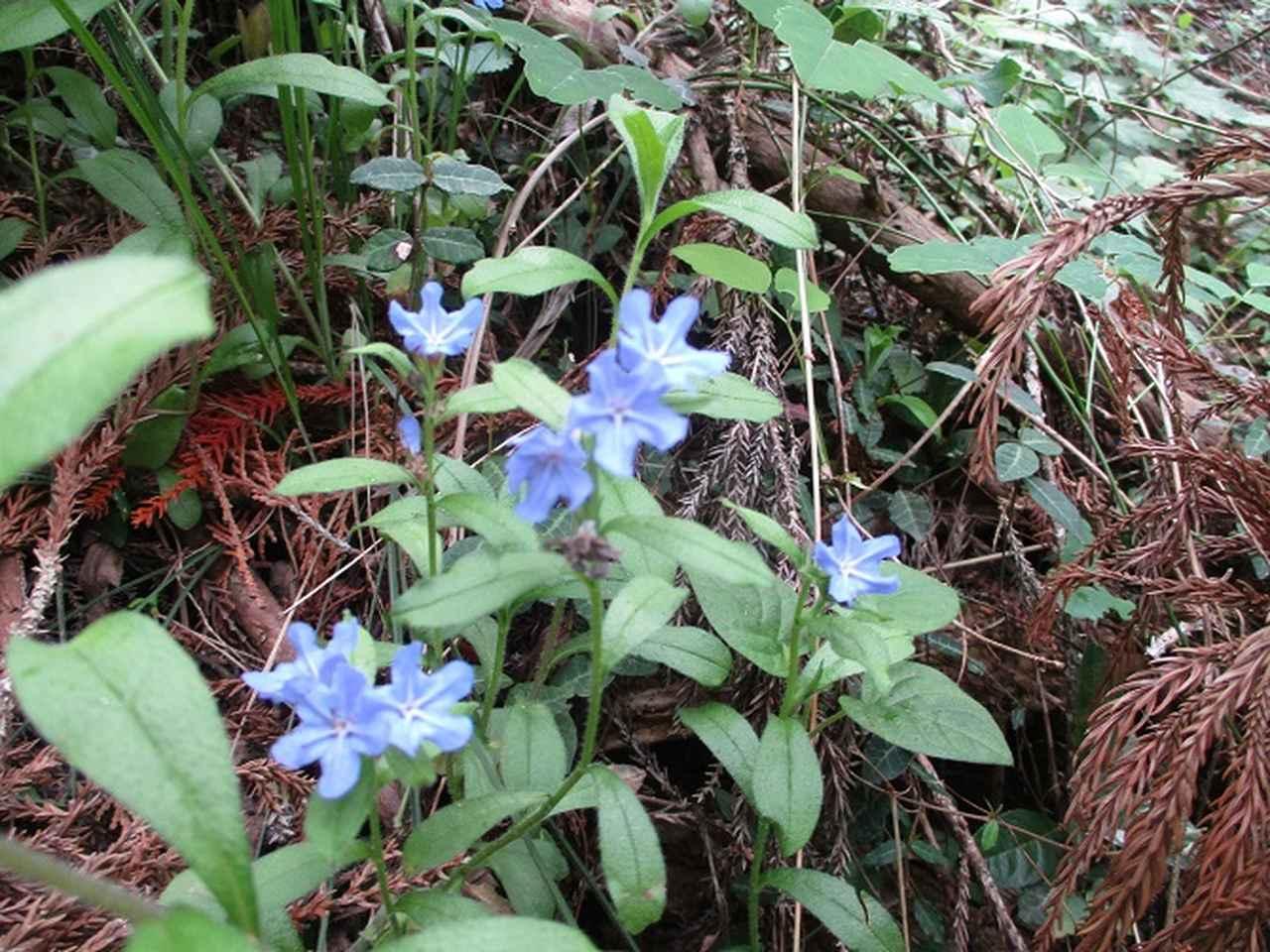 画像3: 5月18日に山旅会 「相模湖から陣馬山」 ツアーに行ってきました!