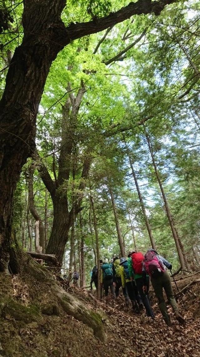 画像1: 5月19日に荻野ガイドのコースで 宮地山~セーメーバン へ行って来ました♪