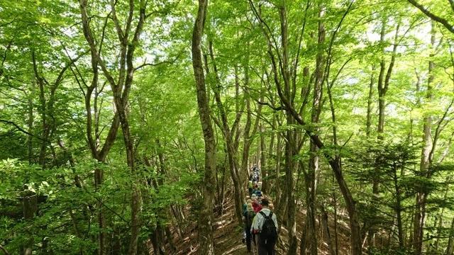 画像8: 5月19日に荻野ガイドのコースで 宮地山~セーメーバン へ行って来ました♪