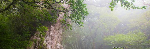 画像: 縄文杉トレッキング|世界自然遺産 屋久島ツアー・旅行|クラブツーリズム