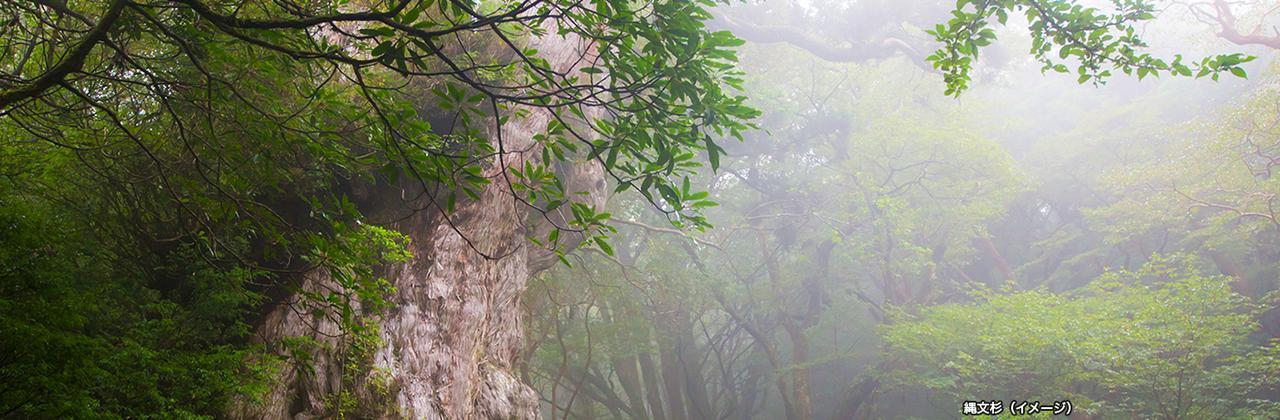 画像: 縄文杉トレッキング 世界自然遺産 屋久島ツアー・旅行 クラブツーリズム