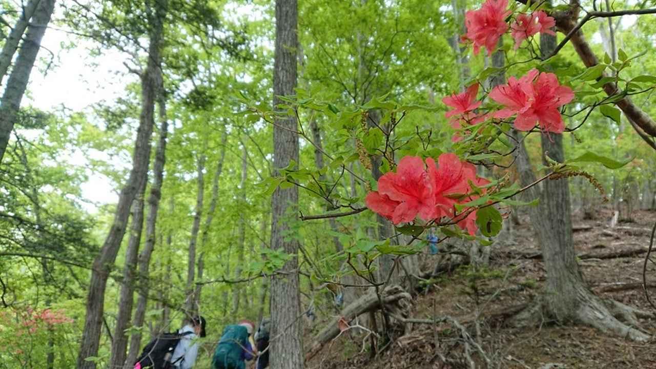 画像4: 5月19日に荻野ガイドのコースで 宮地山~セーメーバン へ行って来ました♪