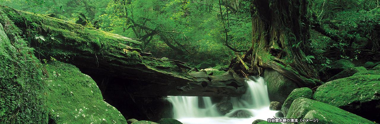 画像: 世界自然遺産 屋久島ツアー・旅行 クラブツーリズム