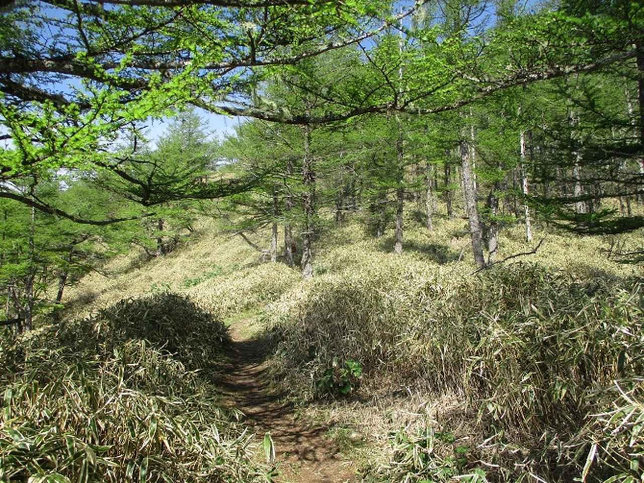 画像9: 6月の山旅会 「甘利山」 の下見にいってきました!