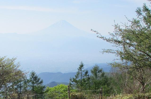 画像4: 6月の山旅会 「甘利山」 の下見にいってきました!