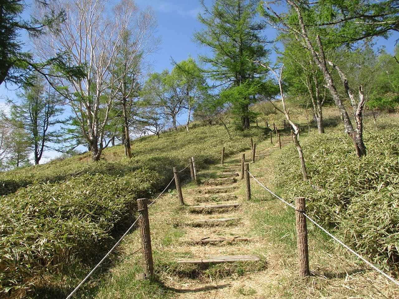 画像2: 6月の山旅会 「甘利山」 の下見にいってきました!