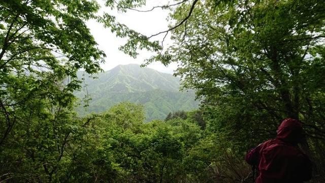 画像10: 5月20日に佐藤威行ガイドのツアーで、 大室山~加入道山 へ行って来ました♪
