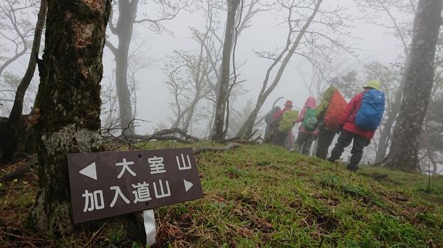 画像6: 5月20日に佐藤威行ガイドのツアーで、 大室山~加入道山 へ行って来ました♪