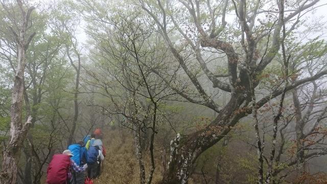 画像2: 5月20日に佐藤威行ガイドのツアーで、 大室山~加入道山 へ行って来ました♪