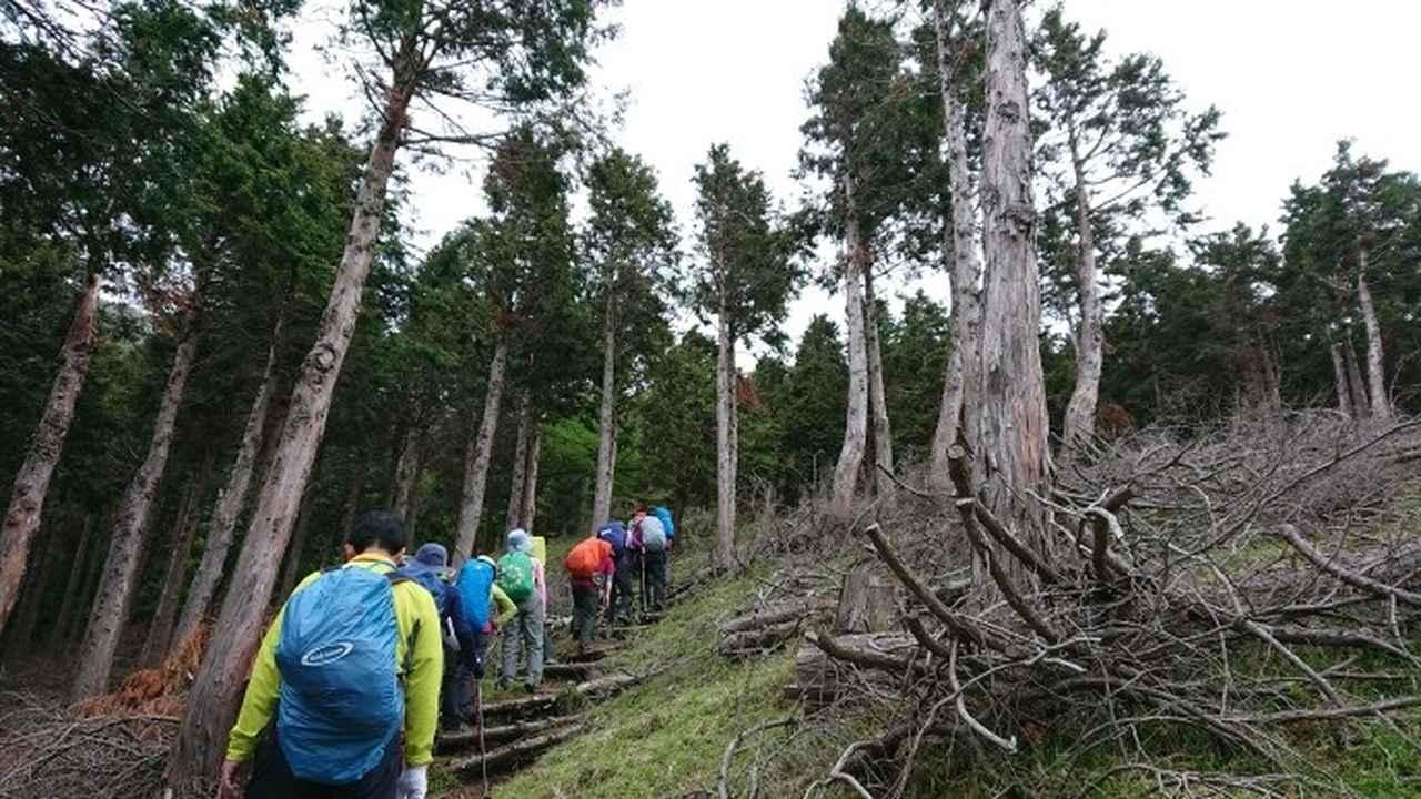画像1: 5月20日に佐藤威行ガイドのツアーで、 大室山~加入道山 へ行って来ました♪