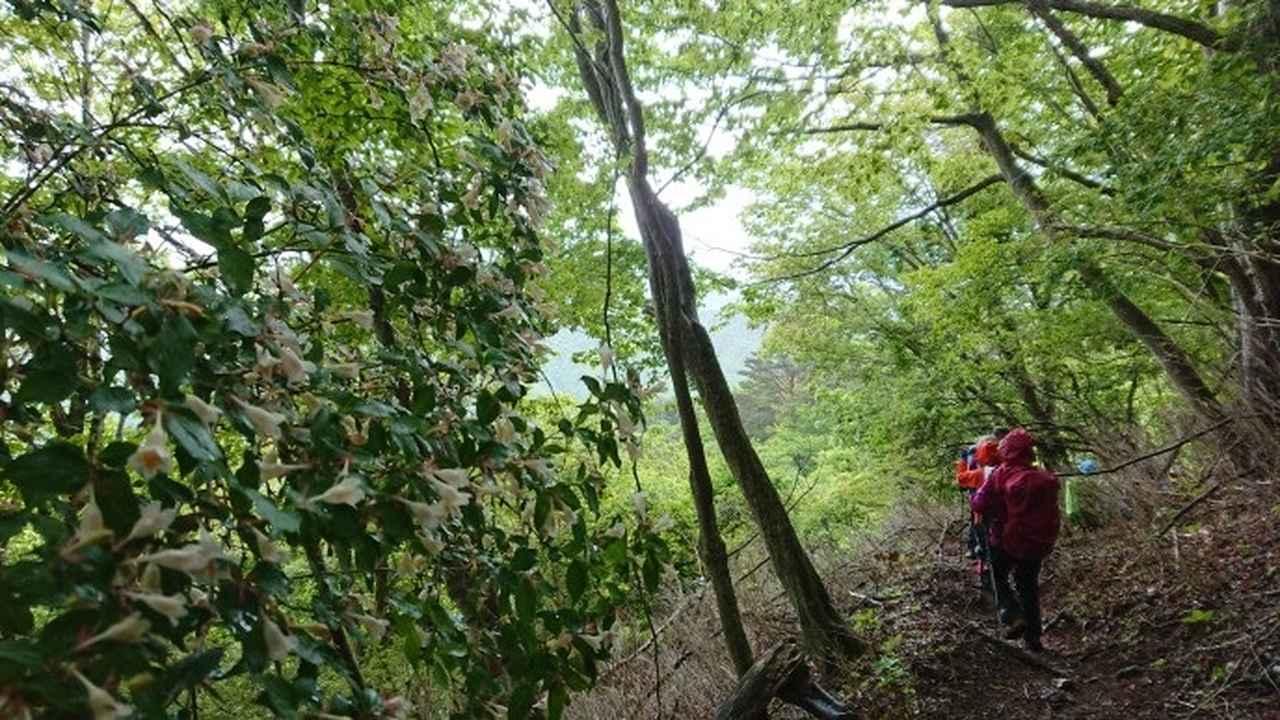 画像9: 5月20日に佐藤威行ガイドのツアーで、 大室山~加入道山 へ行って来ました♪
