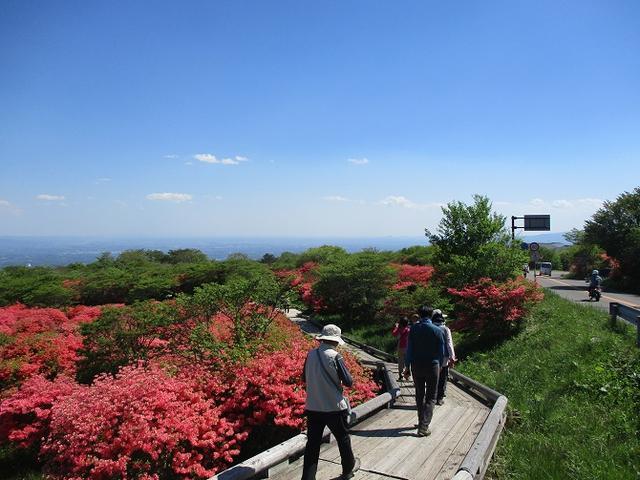 画像17: 5月24日に岡田ガイドのコースで 那須日の出平 のミネザクラに会いに行って来ました♪