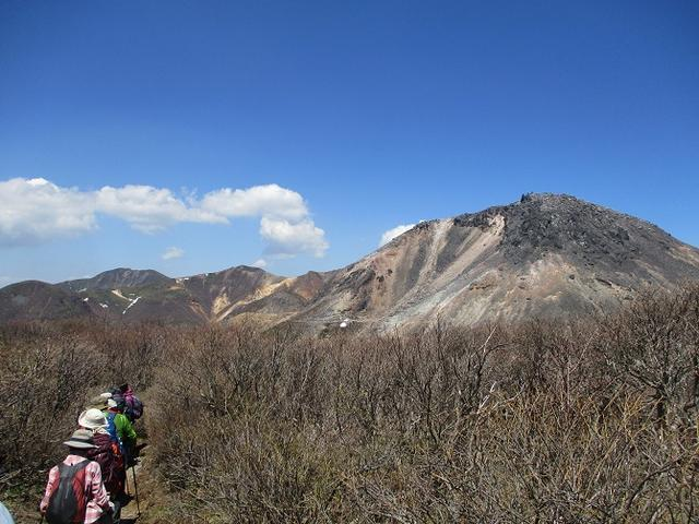 画像15: 5月24日に岡田ガイドのコースで 那須日の出平 のミネザクラに会いに行って来ました♪