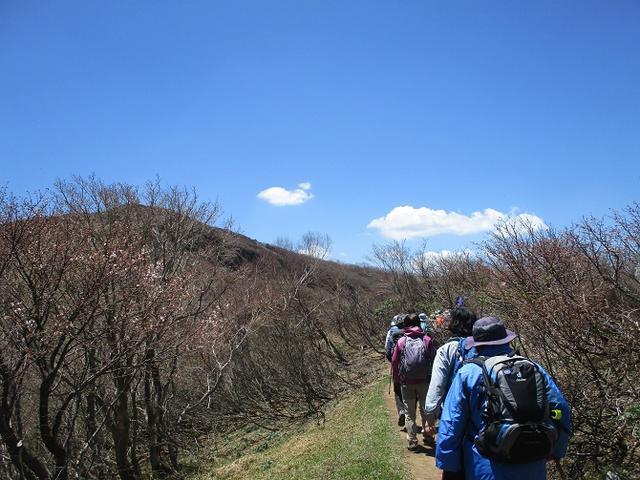 画像6: 5月24日に岡田ガイドのコースで 那須日の出平 のミネザクラに会いに行って来ました♪