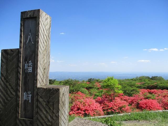 画像16: 5月24日に岡田ガイドのコースで 那須日の出平 のミネザクラに会いに行って来ました♪