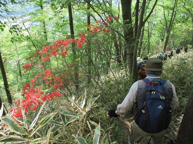 画像11: 5月27日に山旅会 「榛名富士」 ツアーにいってきました!