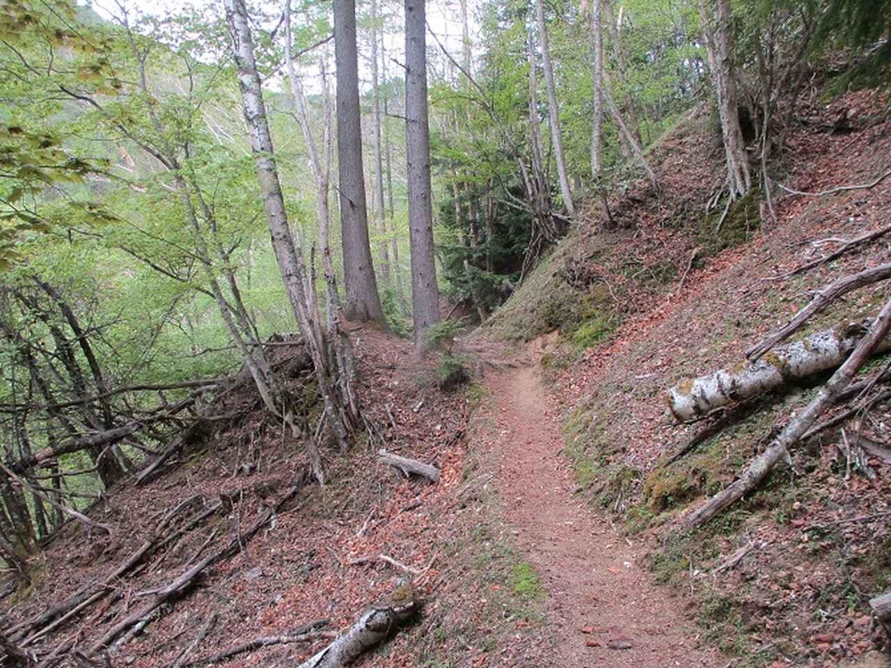 画像3: 6月の山旅会 「甲武信ヶ岳」 ツアーの下見に行ってきました!