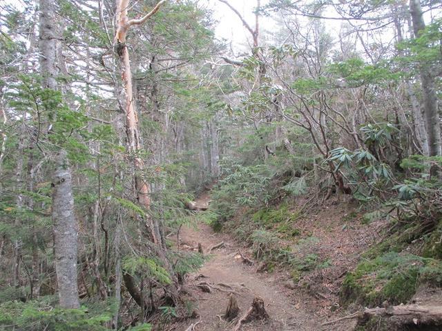画像9: 6月の山旅会 「甲武信ヶ岳」 ツアーの下見に行ってきました!