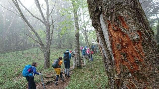 画像10: 6月2日に宮下ガイドの秀麗富岳十二景シリーズ第10回で 雁ヶ腹摺山 へ行ってきました♪