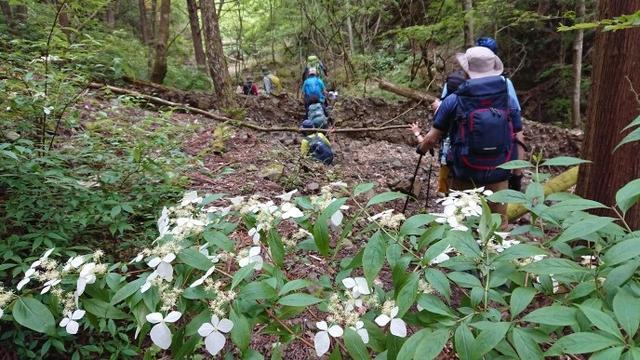画像4: 6月2日に宮下ガイドの秀麗富岳十二景シリーズ第10回で 雁ヶ腹摺山 へ行ってきました♪
