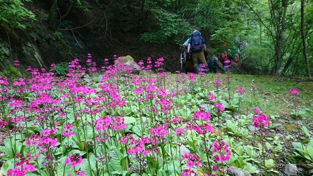 画像3: 6月2日に宮下ガイドの秀麗富岳十二景シリーズ第10回で 雁ヶ腹摺山 へ行ってきました♪